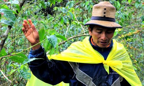 chajul el quiche guatemala 2013 coffee farmer