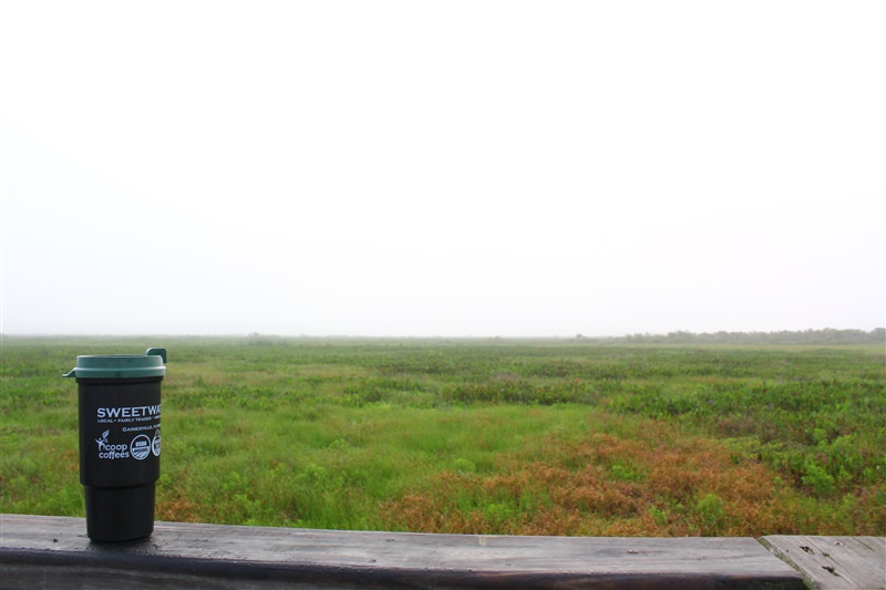 good-morning-gainesville-view.jpg