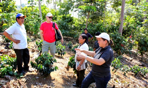 pangoa peru 2014 learning about coffee process
